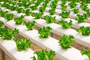 greenhouse cultivation, cultivators