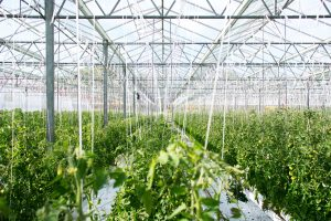 controlled environment agriculture training, greenhouse