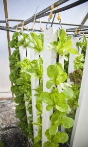 hydroponics product businesses