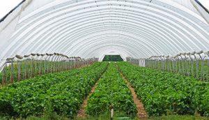 indoor growing
