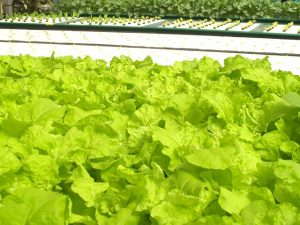 controlled environment agriculture technology