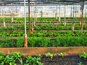 urban agriculture act