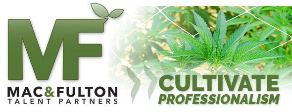 cannabis staffing, hiring, cannabis industry, marijuana careers