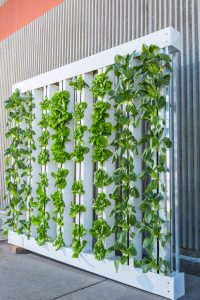 horticultural lighting jobs